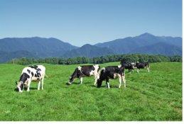 livestock-fencing-solutions